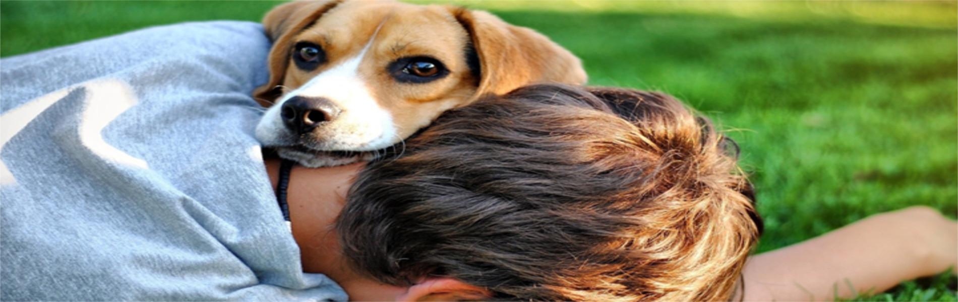 O cachorro é um bom amigo e também sabe demonstrar carinho