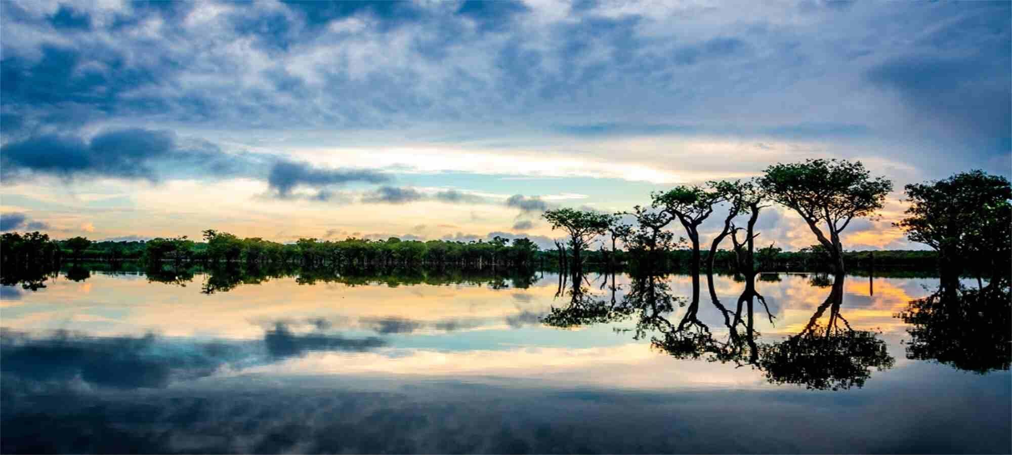 Amazônia-Pulmão-do-Planeta